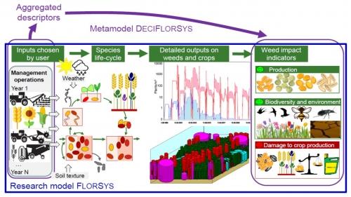 FlorSys pour la gestion agroécologique des adventices