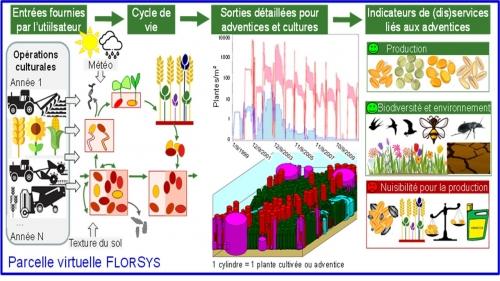 Quantifying the nitrogen demand of individual plants in heterogeneous canopies